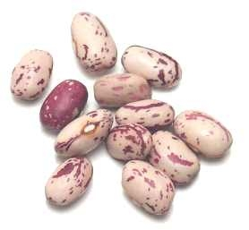 How to cook october beans